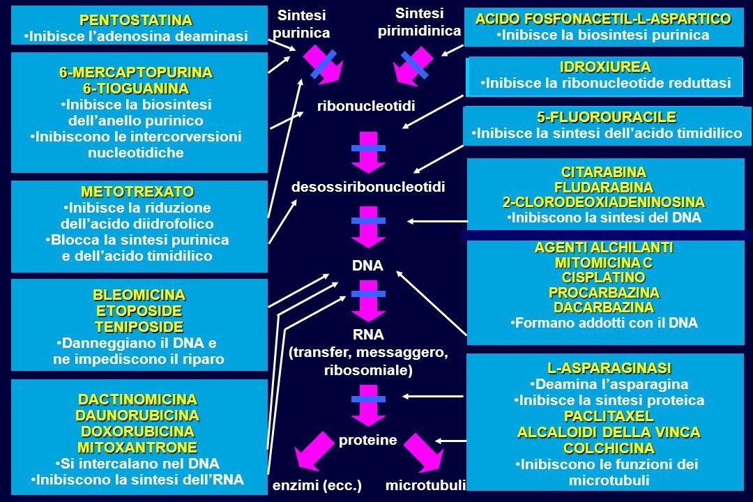 Inibisce l'adenosina deaminasi Inibisce la biosintesi purinica