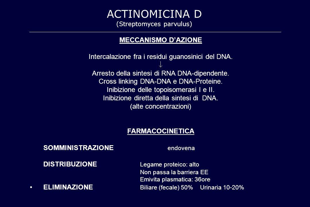 ACTINOMICINA D MECCANISMO D'AZIONE