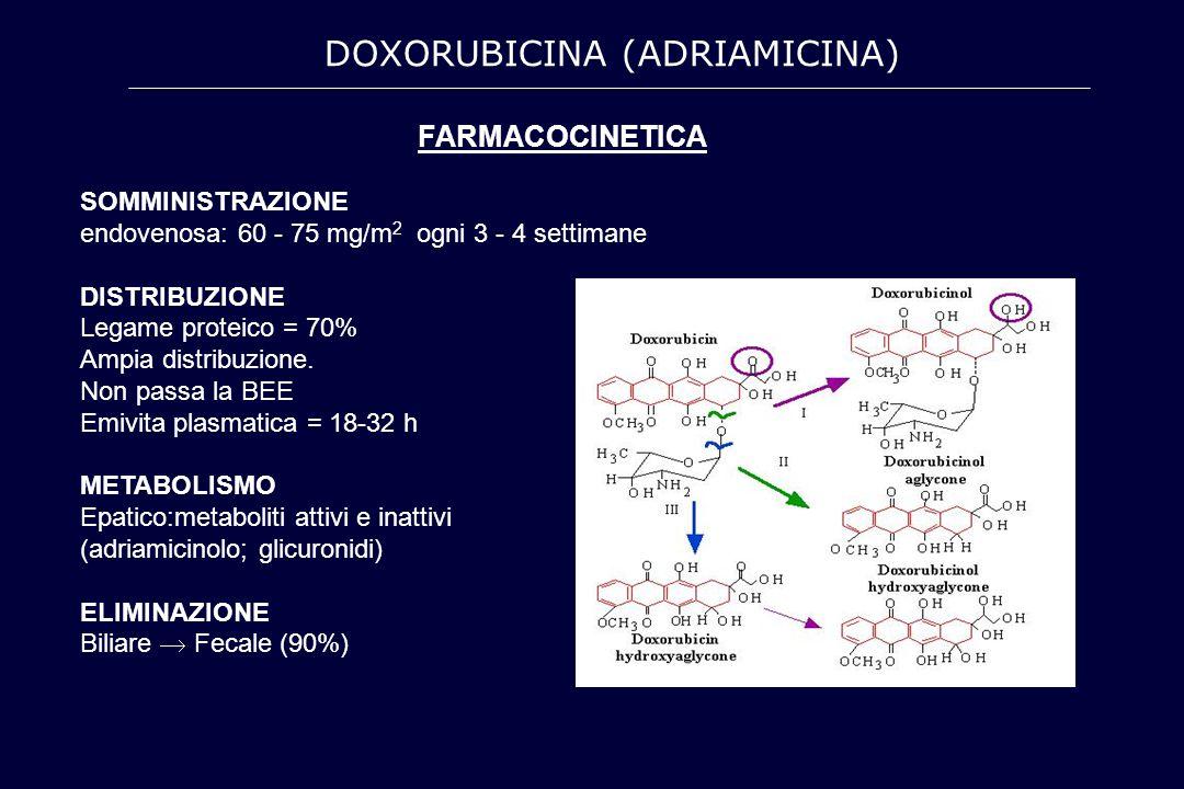 DOXORUBICINA (ADRIAMICINA)
