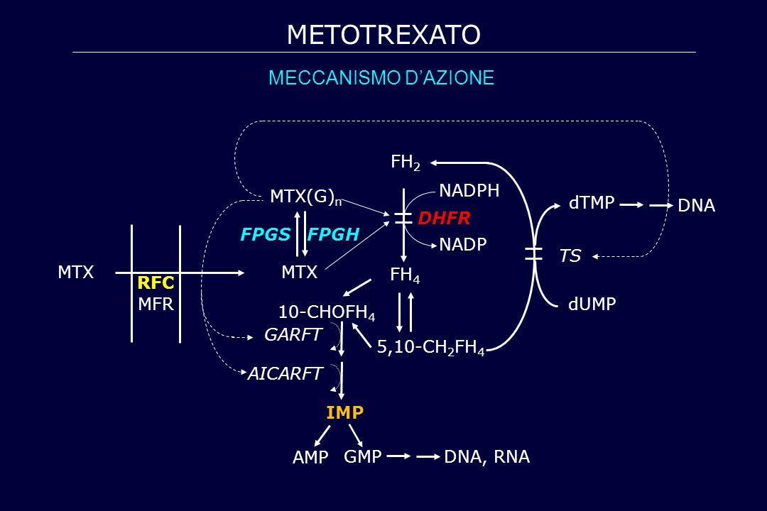 METOTREXATO MECCANISMO D'AZIONE MTX FPGS FPGH MTX(G)n FH4 5,10-CH2FH4