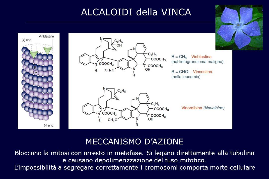 ALCALOIDI della VINCA MECCANISMO D'AZIONE