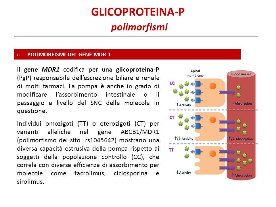 GLICOPROTEINA-P polimorfismi