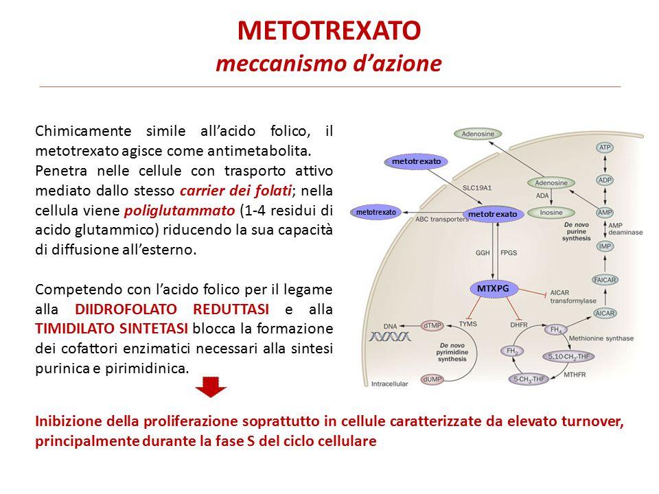 METOTREXATO meccanismo d'azione