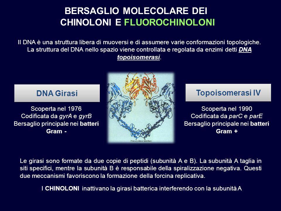 BERSAGLIO MOLECOLARE DEI CHINOLONI E FLUOROCHINOLONI