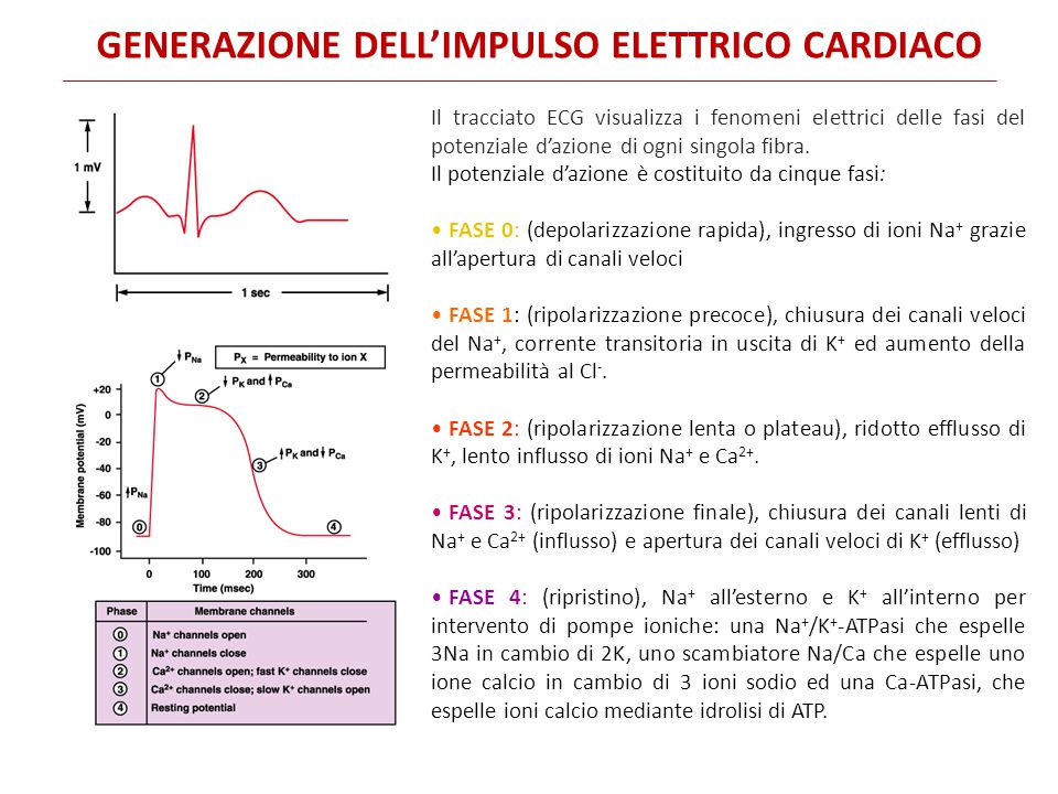 Generazione dell'impulso elettrico cardiaco