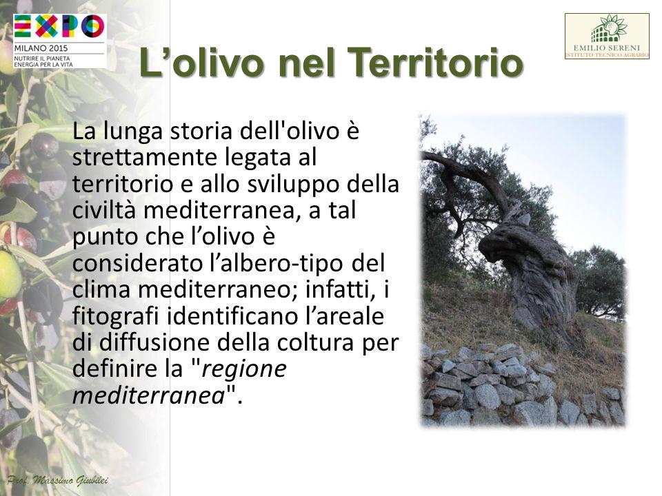 L'olivo nel Territorio