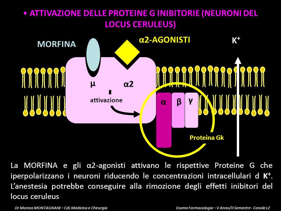 ATTIVAZIONE DELLE PROTEINE G INIBITORIE (NEURONI DEL LOCUS CERULEUS)