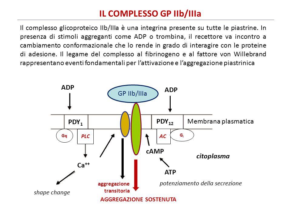 IL COMPLESSO GP IIb/IIIa