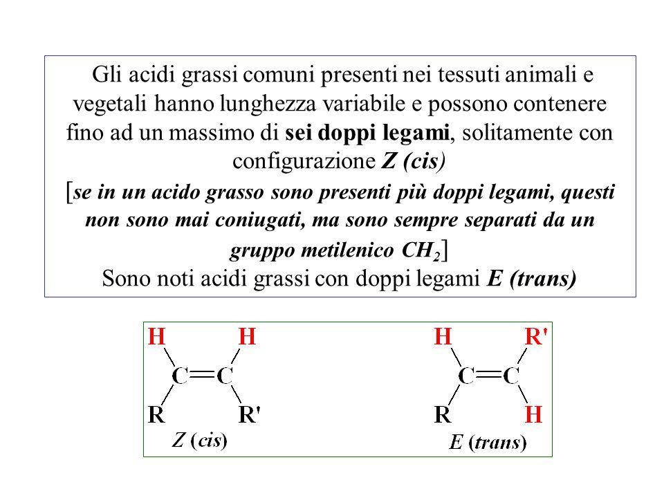 Sono noti acidi grassi con doppi legami E (trans)