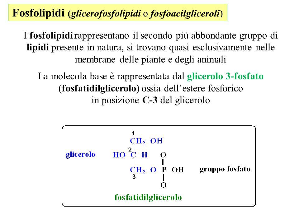 Fosfolipidi (glicerofosfolipidi o fosfoacilgliceroli)