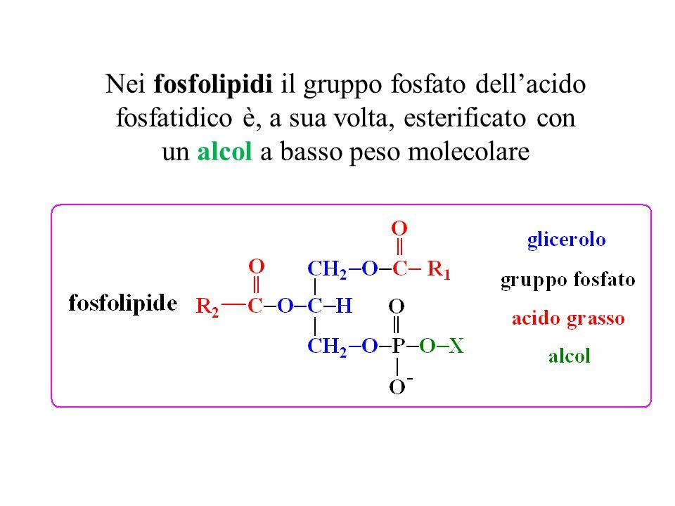 Nei fosfolipidi il gruppo fosfato dell'acido fosfatidico è, a sua volta, esterificato con un alcol a basso peso molecolare