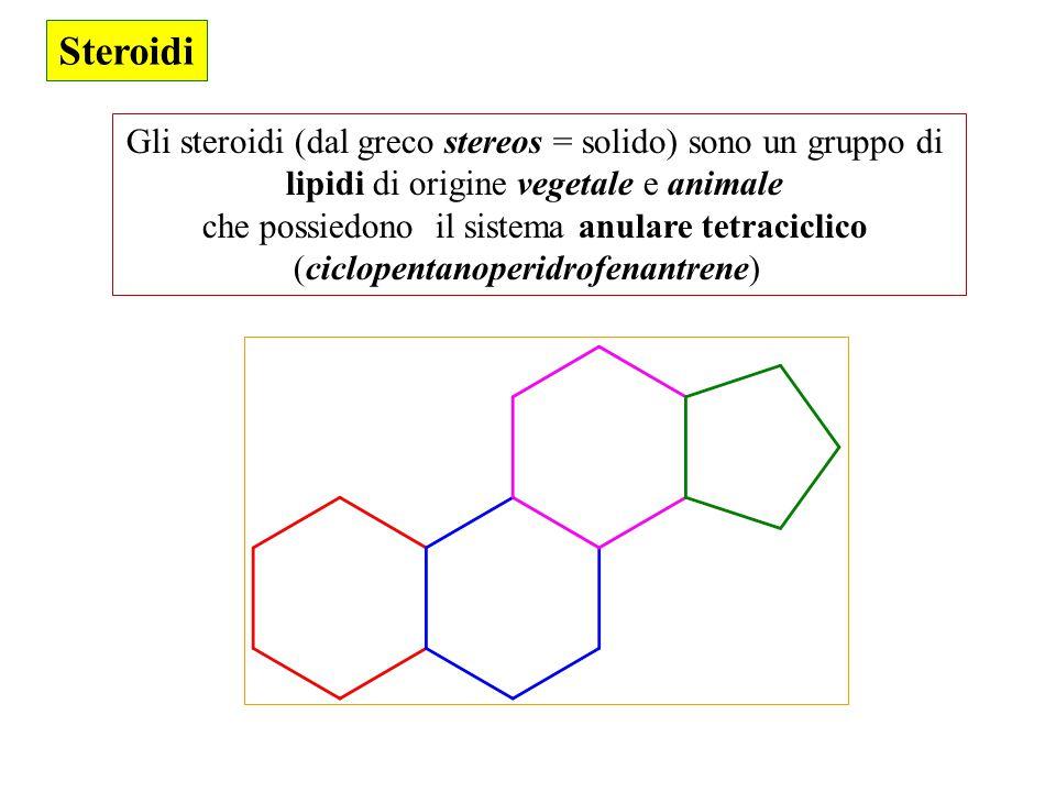 Steroidi Gli steroidi (dal greco stereos = solido) sono un gruppo di