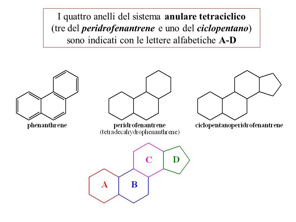 I quattro anelli del sistema anulare tetraciclico