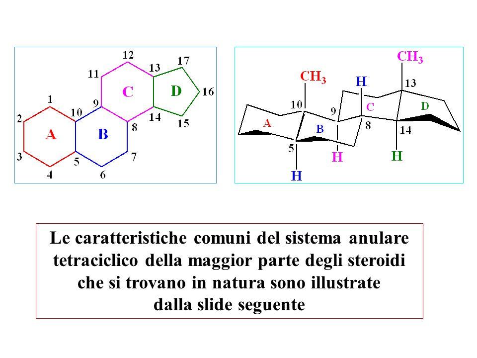 Le caratteristiche comuni del sistema anulare tetraciclico della maggior parte degli steroidi che si trovano in natura sono illustrate