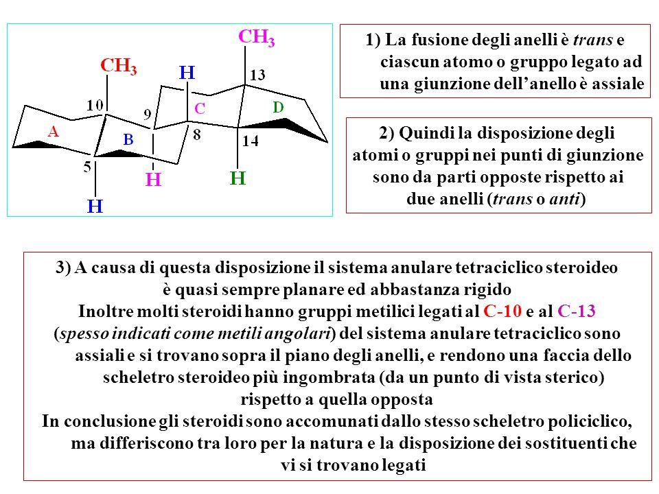 2) Quindi la disposizione degli atomi o gruppi nei punti di giunzione