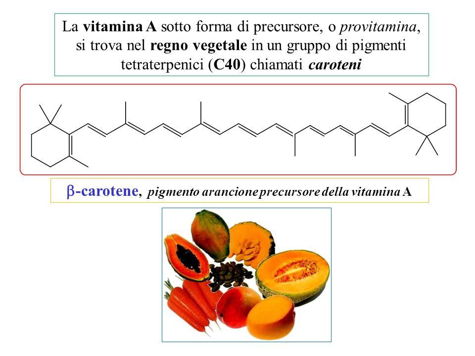 b-carotene, pigmento arancione precursore della vitamina A