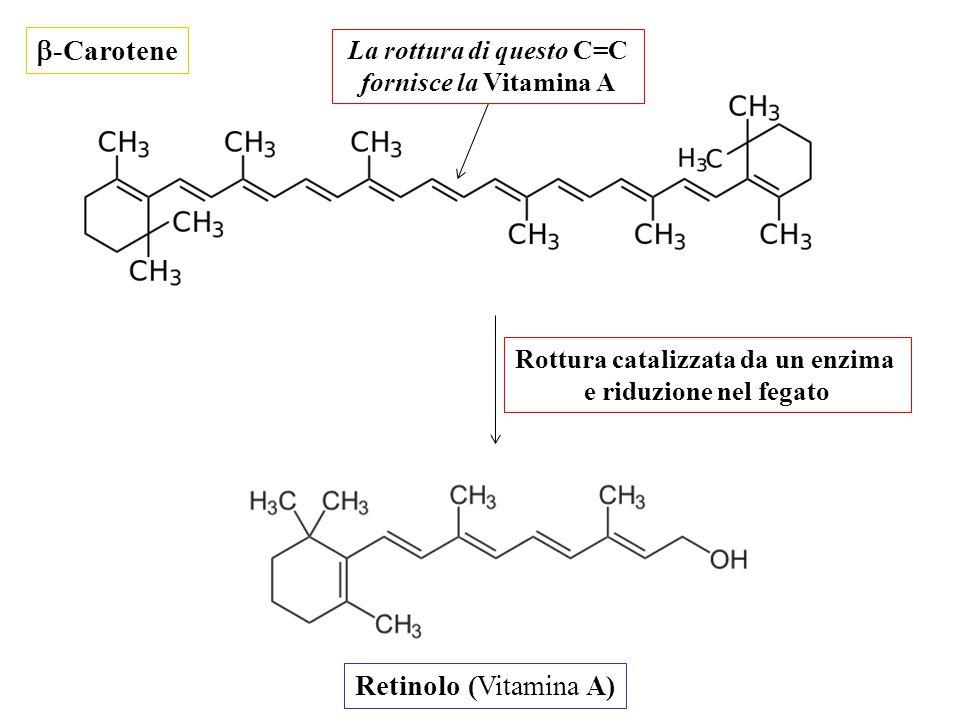 La rottura di questo C=C Rottura catalizzata da un enzima