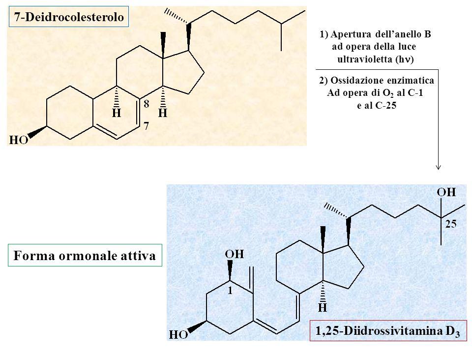 1) Apertura dell'anello B 2) Ossidazione enzimatica