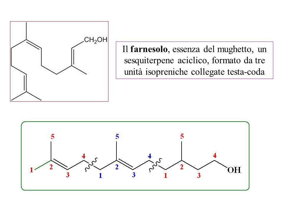 Il farnesolo, essenza del mughetto, un sesquiterpene aciclico, formato da tre unità isopreniche collegate testa-coda