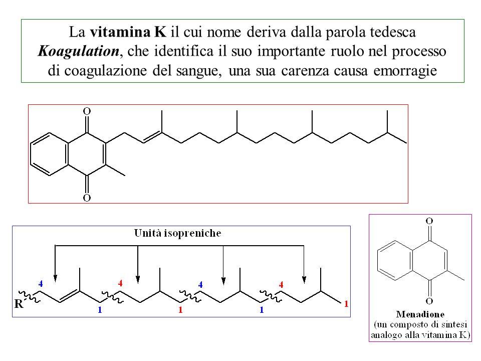 La vitamina K il cui nome deriva dalla parola tedesca Koagulation, che identifica il suo importante ruolo nel processo di coagulazione del sangue, una sua carenza causa emorragie