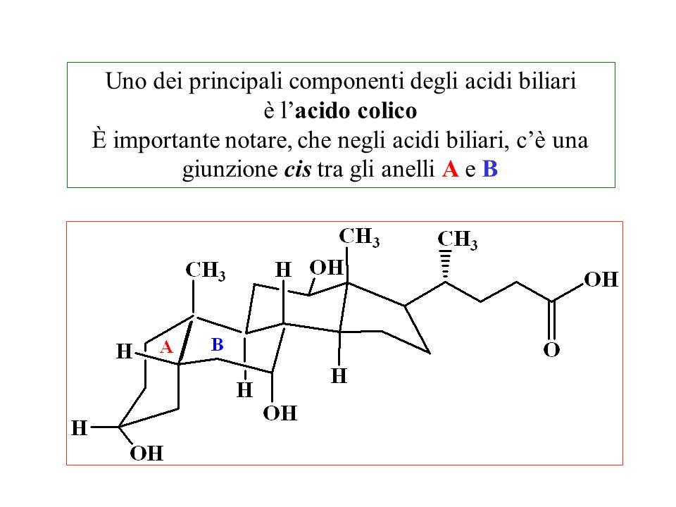 Uno dei principali componenti degli acidi biliari