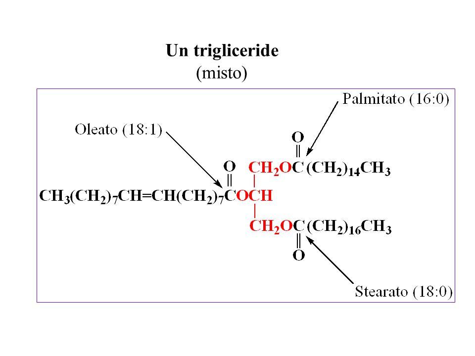 Un trigliceride (misto)
