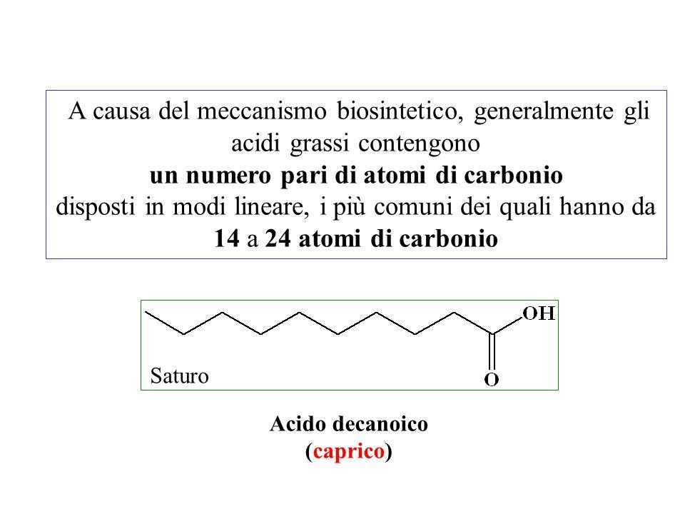 un numero pari di atomi di carbonio