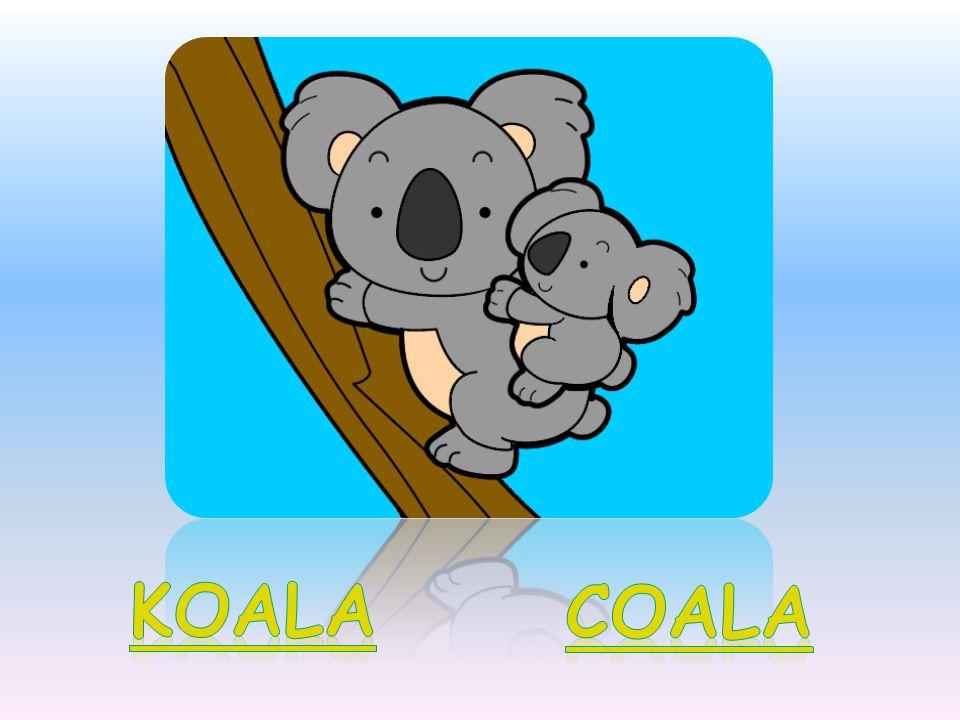 KOALA COALA