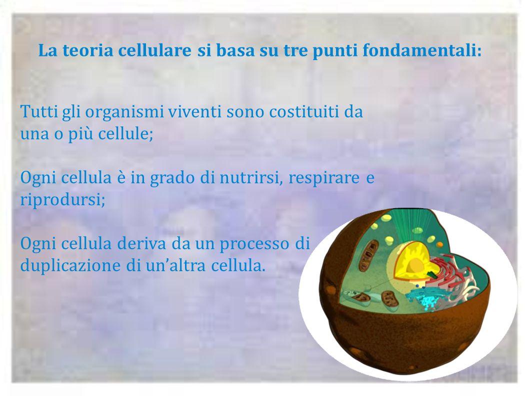 La teoria cellulare si basa su tre punti fondamentali: