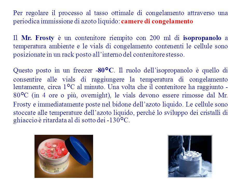Per regolare il processo al tasso ottimale di congelamento attraverso una periodica immissione di azoto liquido: camere di congelamento