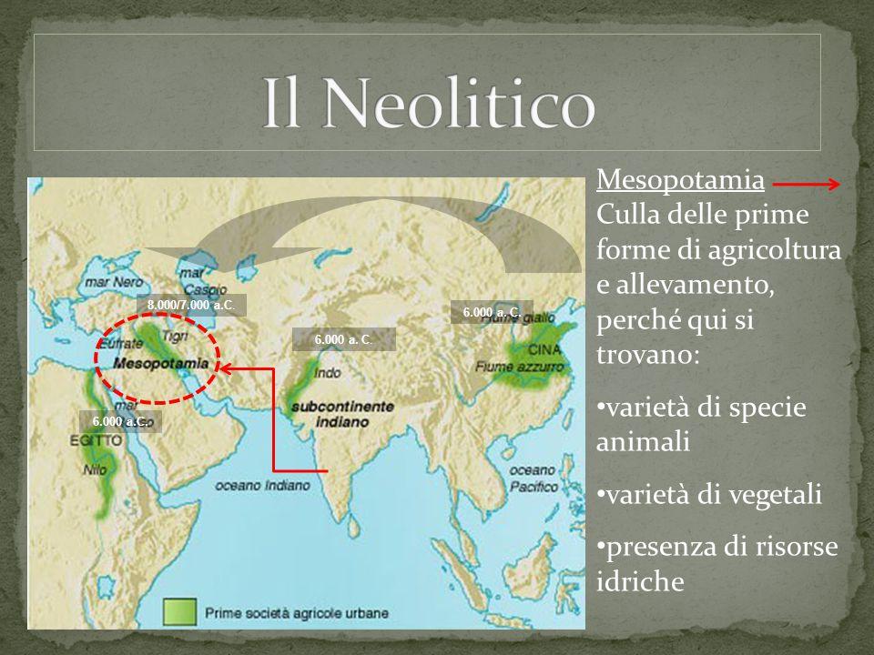 Il Neolitico Mesopotamia Culla delle prime forme di agricoltura e allevamento, perché qui si trovano: