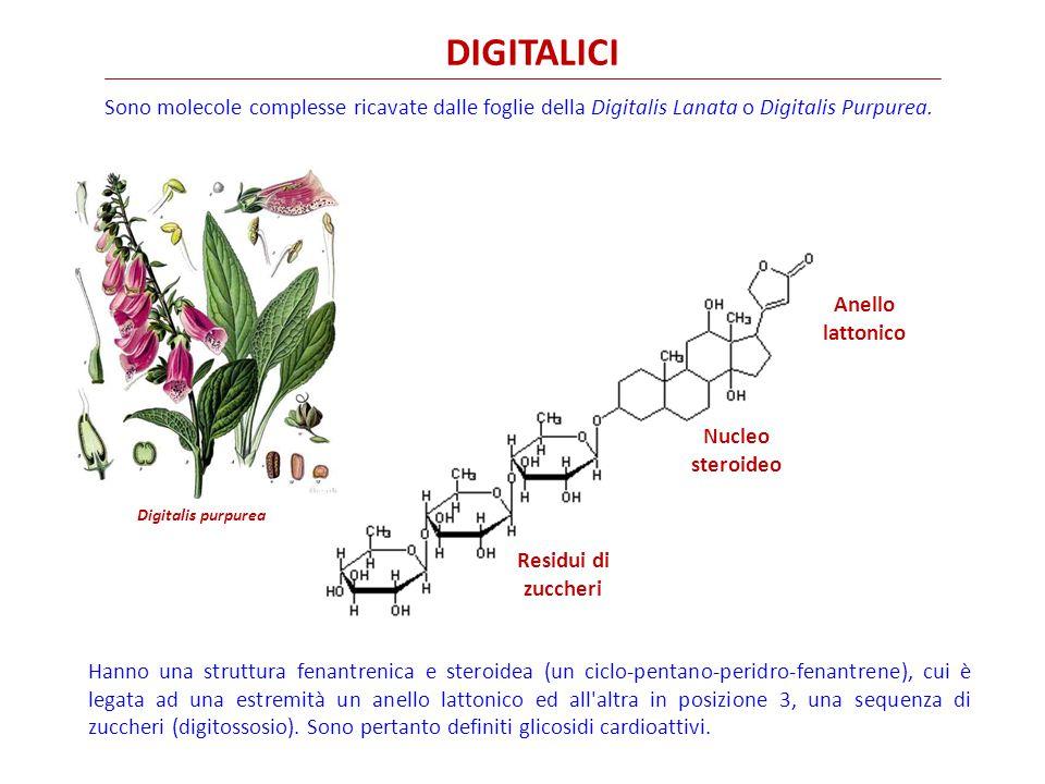 DIGITALICI Sono molecole complesse ricavate dalle foglie della Digitalis Lanata o Digitalis Purpurea.