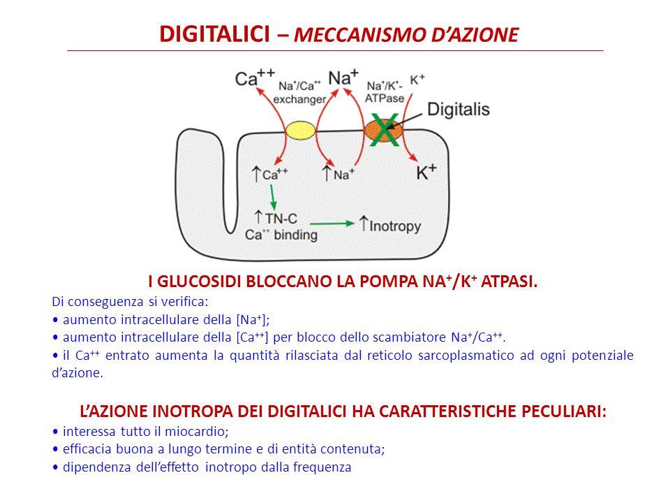 DIGITALICI – meccanismo d'azione