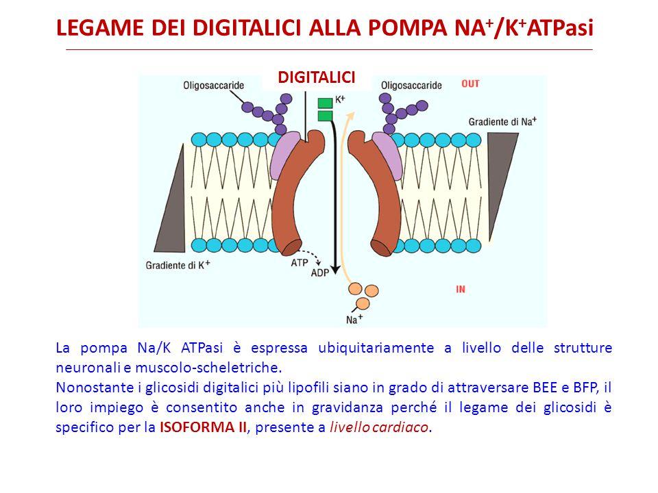 legame dei digitalici alla pompa Na+/K+ATPasi