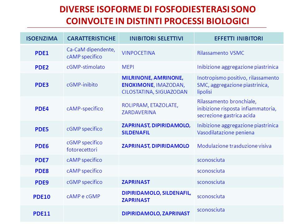 Diverse isoforme di fosfodiesterasi sono