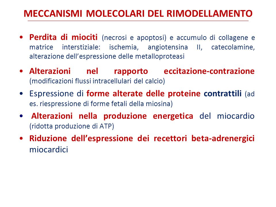 MECCANISMI MOLECOLARI DEL RIMODELLAMENTO
