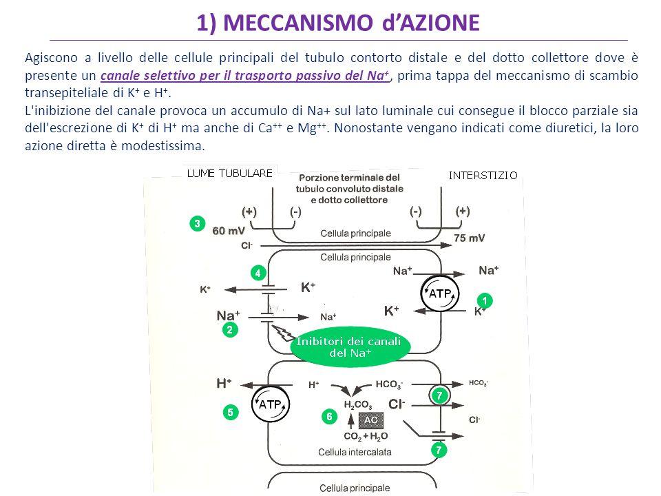 1) MECCANISMO d'AZIONE