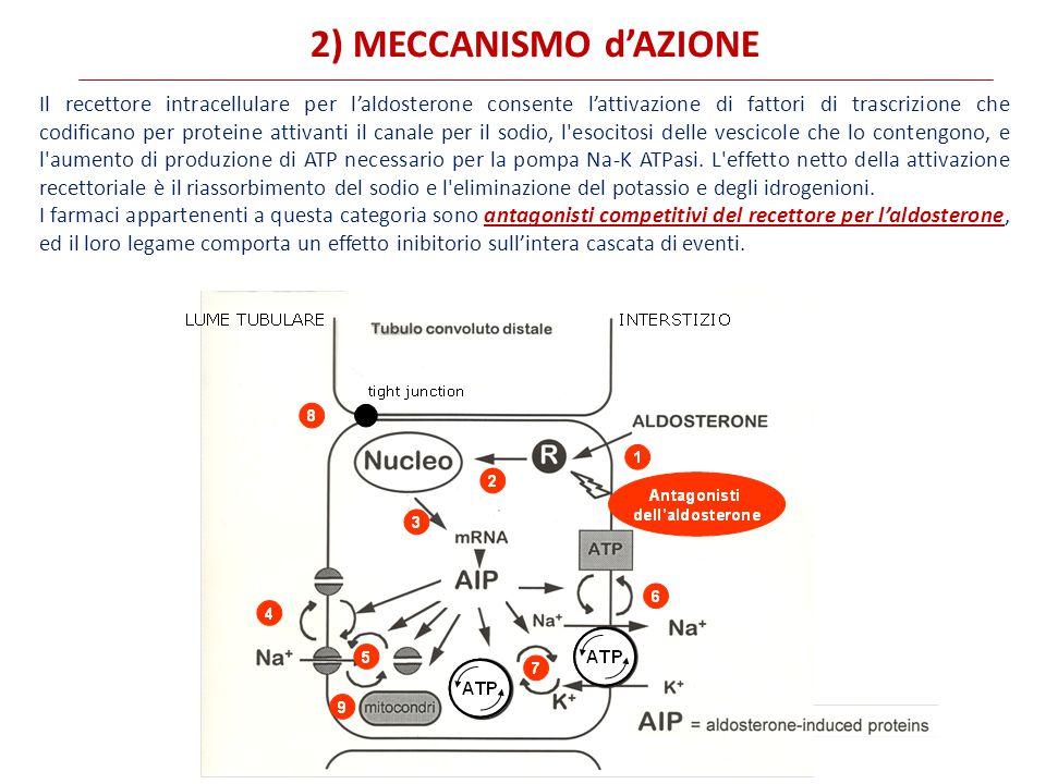 2) MECCANISMO d'AZIONE