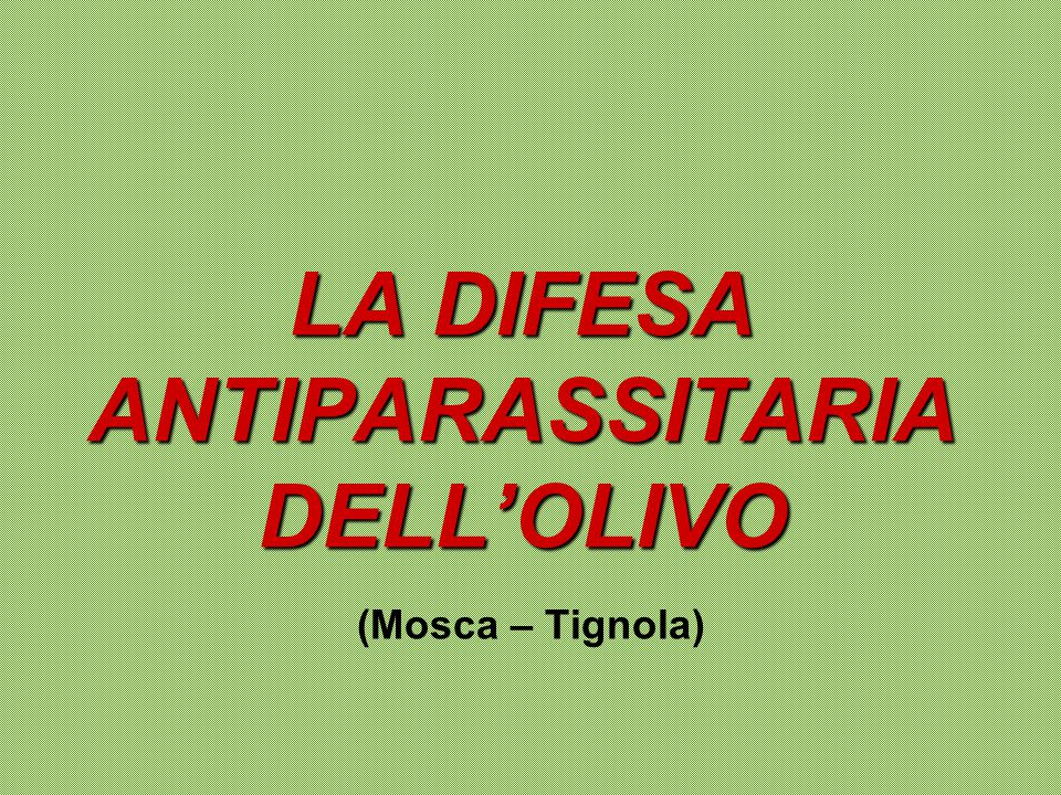 LA DIFESA ANTIPARASSITARIA DELL'OLIVO