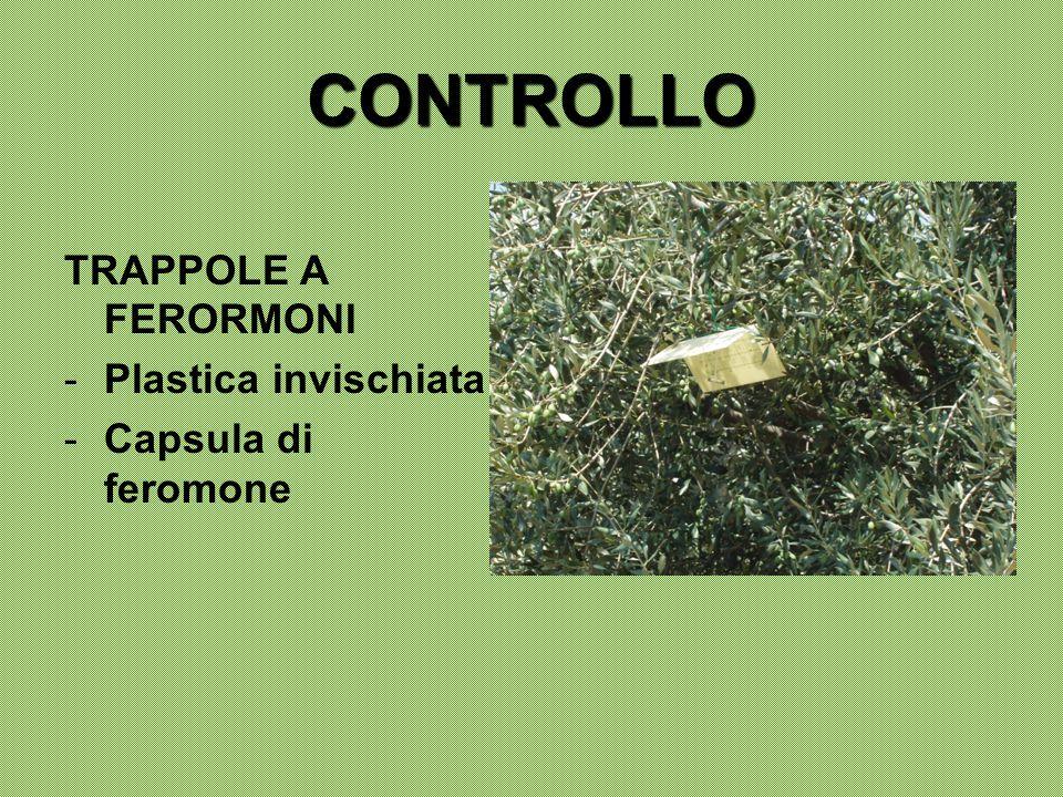 CONTROLLO TRAPPOLE A FERORMONI Plastica invischiata