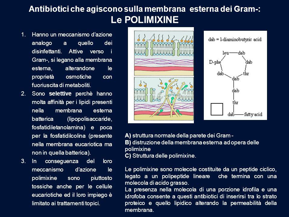 Antibiotici che agiscono sulla membrana esterna dei Gram-: