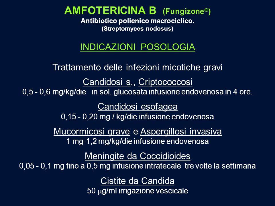 AMFOTERICINA B (Fungizone) (Streptomyces nodosus)