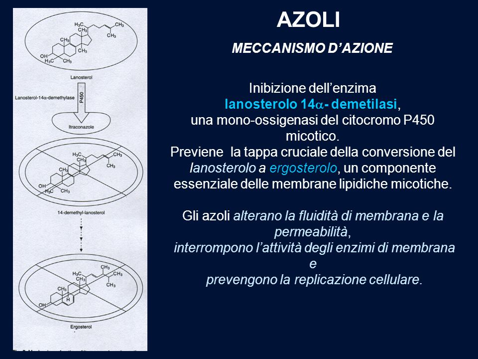 AZOLI MECCANISMO D'AZIONE Inibizione dell'enzima