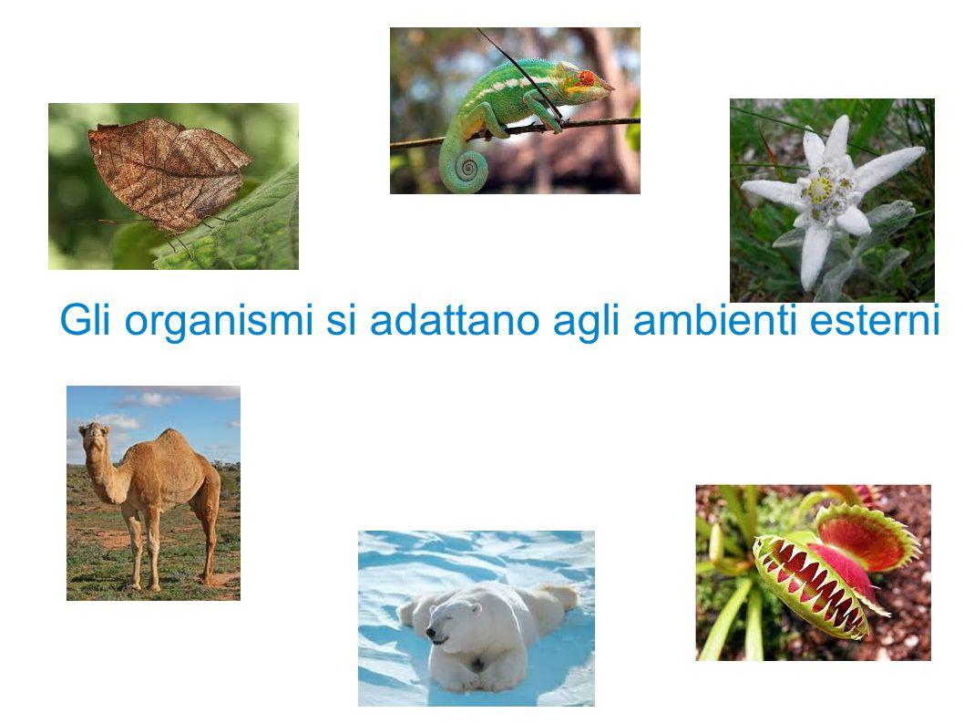 Gli organismi si adattano agli ambienti esterni