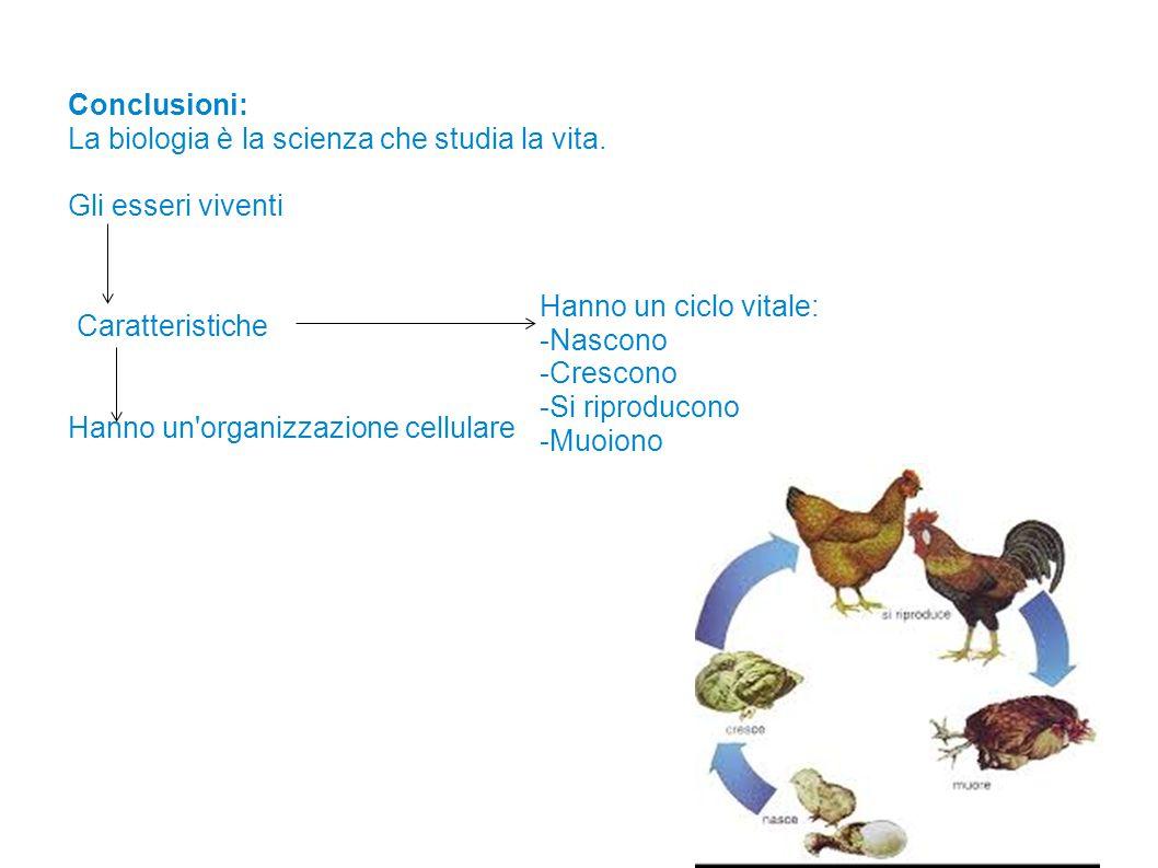 Conclusioni: La biologia è la scienza che studia la vita. Gli esseri viventi. Hanno un ciclo vitale: