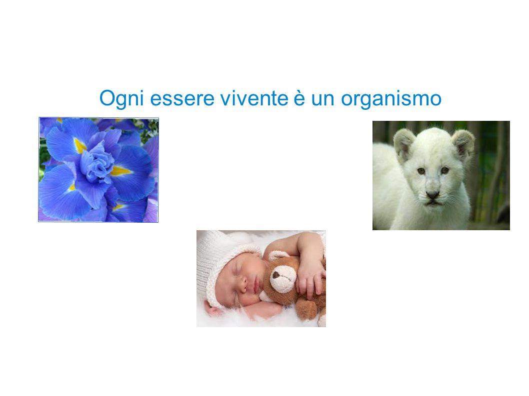 Ogni essere vivente è un organismo