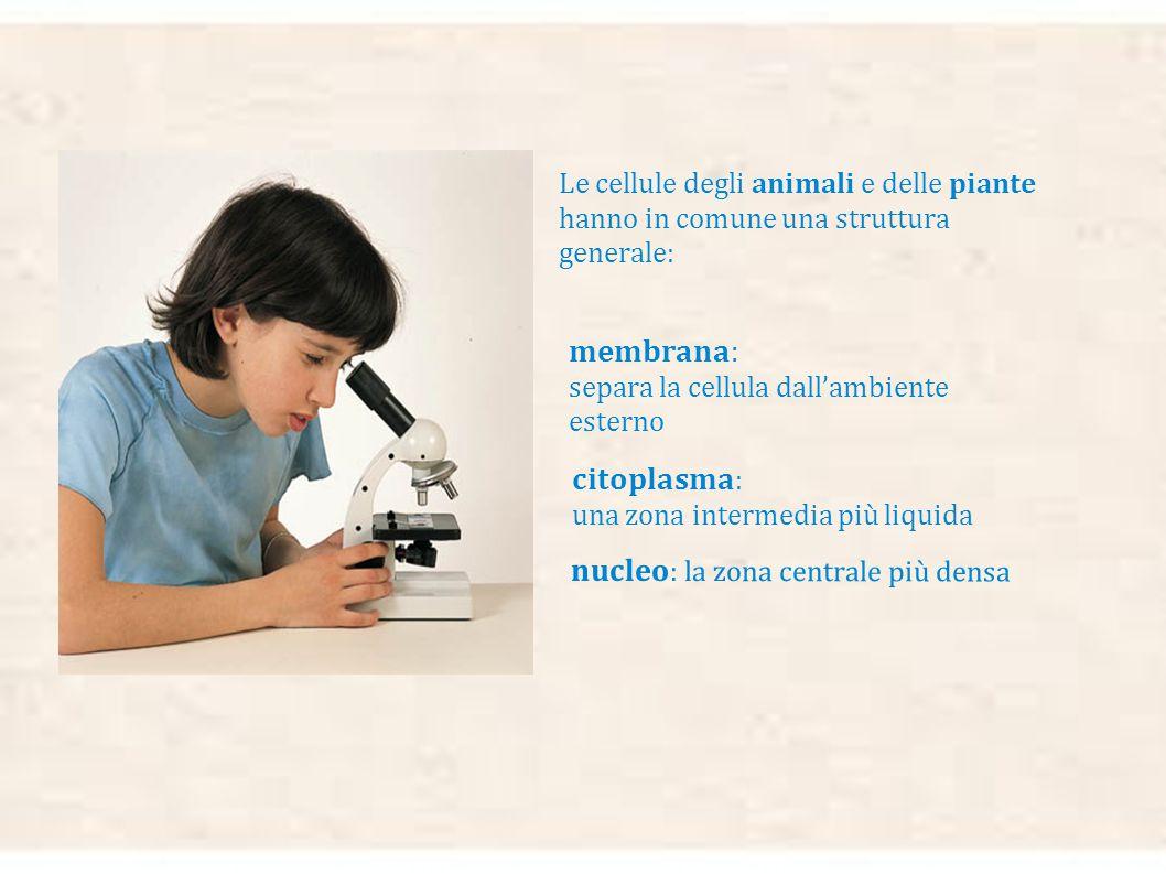 membrana: separa la cellula dall'ambiente esterno