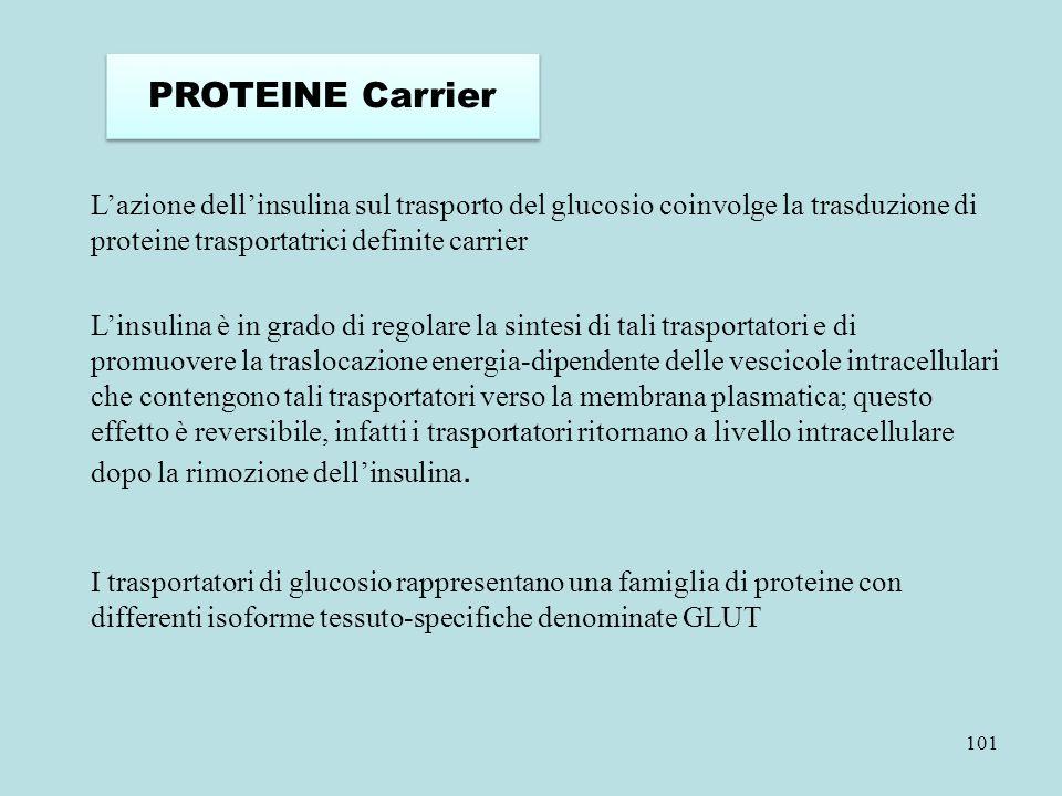 PROTEINE Carrier L'azione dell'insulina sul trasporto del glucosio coinvolge la trasduzione di proteine trasportatrici definite carrier.