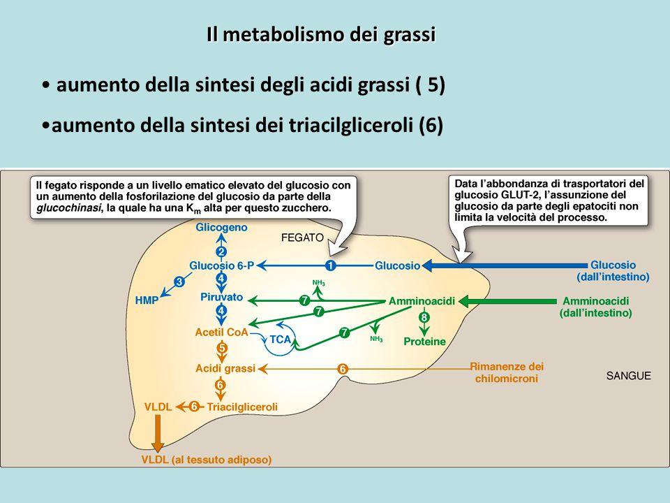 Il metabolismo dei grassi