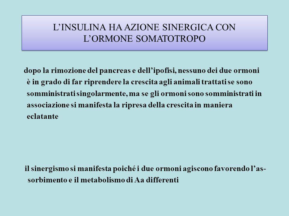 L'INSULINA HA AZIONE SINERGICA CON L'ORMONE SOMATOTROPO